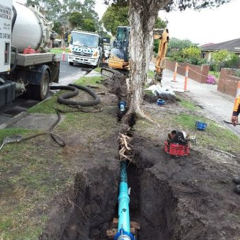 Tree Root Control